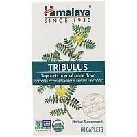 Himalaya Herbal Healthcare, Gokshura, Urinary Support, 60 Caplets, фото 1
