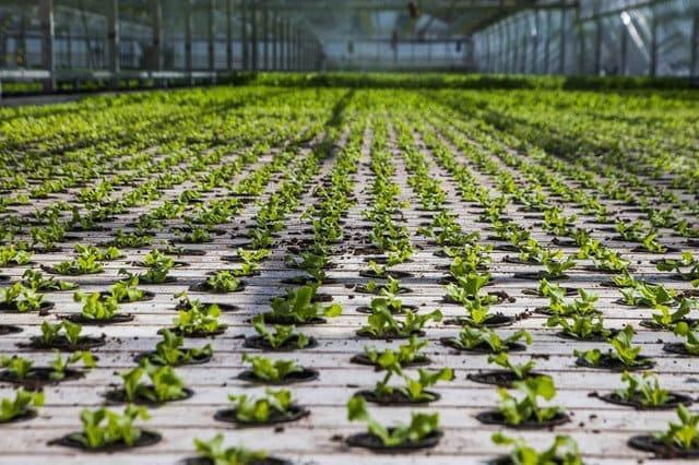 Твердые среды для растений