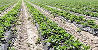 Особенности и выгоды применения агроволокна.