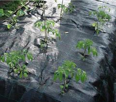 Агроволокно и его применение