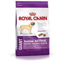 Сухой корм для собак Royal Canin Giant Junior Active, 15 кг