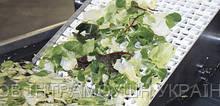 Транспортерна стрічка Habasit для транспортування овочів та фруктів