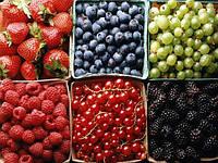 Польза ягод голубики, жимолости, годжи, клюквы, брусники, малины, клубники