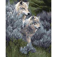 Малювання по номерах КНО2435 Пара вовків-2 40*50см