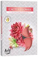 Свеча чайная ароматизированная Bispol Цветок кактуса 1.5 см 6 шт (p15-312)