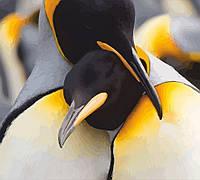 Набір-стандарт картина за номерами Пара пінгвінів, фото 1