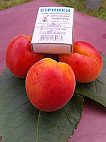 Саженцы абрикоса Харостар (Канада)
