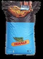 Кукуруза ДКС 3507