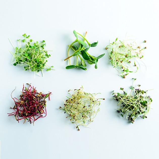микрогрин ростки укропа, редис, горчица, руккола, горчица