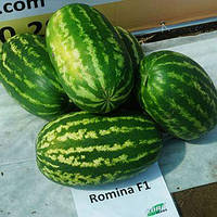 АРБУЗ Romina F1 (Ромина F1)  - 500с. (Cora Seed)