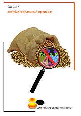 Корма поражают плесневые грибки и микотоксины?