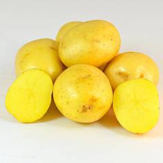 Семенной картофель Вивиана EUROPLANT (40-дневка) 1кг