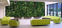 Вертикальне озеленення фитостена
