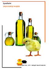 Липиды в организме животных и птицы