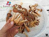 Сушеные грибы опята, фото 3