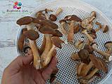 Сушеные грибы опята, фото 7