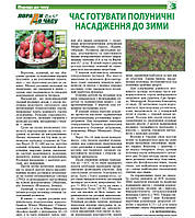 Земляничная плантация: работы в сентябре.