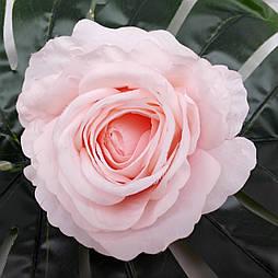 Головка розы раскрытая  пудра 11 см светло-пудровый