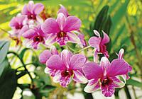 Фотообои флизелиновые 3D цветы 312х219 см Розовые орхидеи на зеленом фоне (3402CNXX)