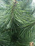 """Ялинка (сосна) штучна. 1.50 м. висота. """"Мікс"""". Натуральний забарвлення, фото 4"""