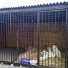 Вольеры и будки для собак. В наличии и под заказ. Киев, фото 4