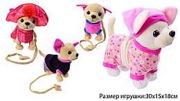 Классная игрушка, новинка Собачка на поводке