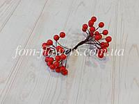 Калина глянцевая Красная, 1,1 см, фото 1