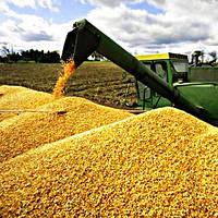 Экспедирование зерновых грузов