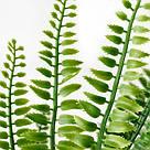 ИКЕА (IKEA) ФЕЙКА, 304.339.45, Искусственное растение в горшке, внутрь / снаружи папоротника, 9 см - ТОП ПРОДАЖ, фото 6