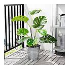 ИКЕА (IKEA) ФЕЙКА, 403.952.88, Искусственное растение в горшке, внутри / снаружи монстр, 19 см - ТОП ПРОДАЖ, фото 2