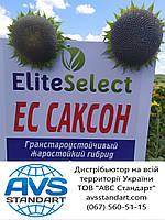 Насіння соняшника для Півдня України САКСОН під Гранстар. Жаростійкий гібрид САКСОН високоврожайний 50,2 ц/га.