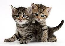 Тесты для котов