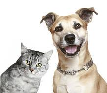 Тесты общие (собаки и коты)