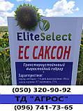 Гибрид ЕС Саксон устойчивый к семи расам заразихи A-G. Семена подсолнечника ЕС Саксон урожайные 42ц. Стандарт, фото 4