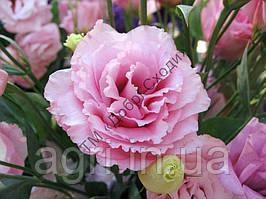 Эустома ABC 2 F1, розовая
