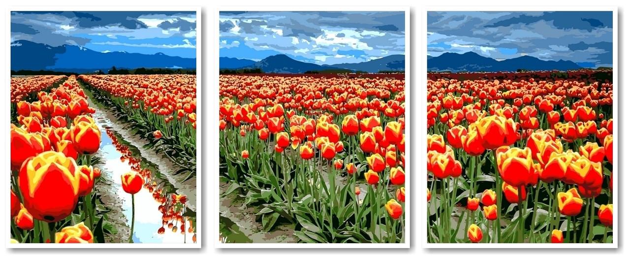 Картины по номерам 50х120 см. Триптих Поля тюльпанов