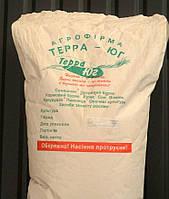 Семена кукурузы Бурштин Терра Юг