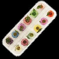 Сухоцветы для маникюра