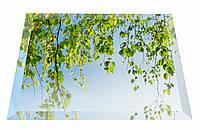 Дзеркало НСК 100см х 100см, срібло ( натуральний колір), з фацетом 1см