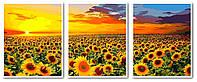 Картины по номерам 50х120 см. Триптих Рассвет на поле с подсолнухами, фото 1