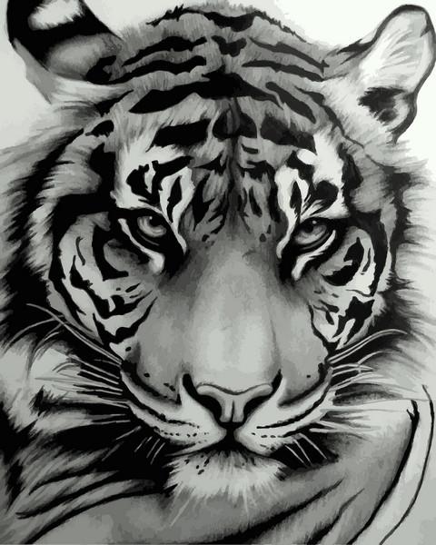 Картины по номерам 40×50 см. Мудрый тигр