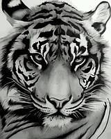 Картины по номерам 40×50 см. Мудрый тигр, фото 1