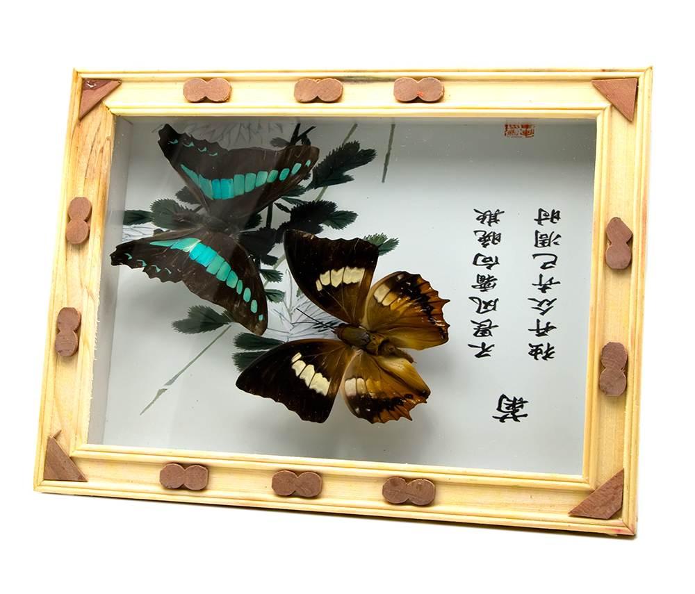 Бабочки в рамке (20х15х2,5 см)(ew-10-1)