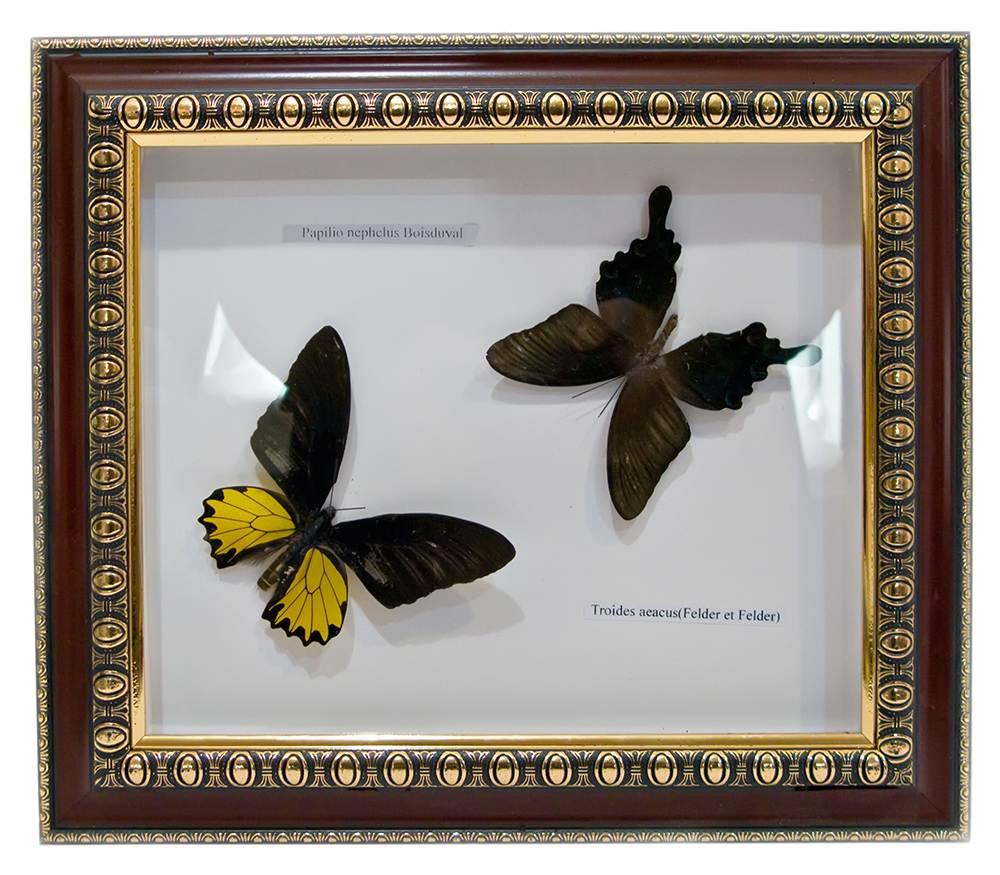 Бабочки в рамке (31х36х3 см)(b150)