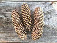 Натуральные шишки ели - заготовка для творчества, 3 шт., высота около 16 см., 20 грн.