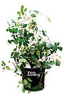 Grow Bag 40 л - Агротекстильный горшок 37,5х37,5 см, фото 4