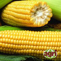 Семена кукурузы Свит Наггет F1, Agri Saaten 1 000 семян