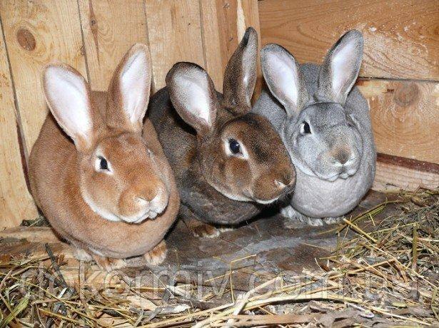 Премикс для кроликов 1%