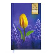 Ежедневник недатированный Grace А6 144 л, фиолетовый