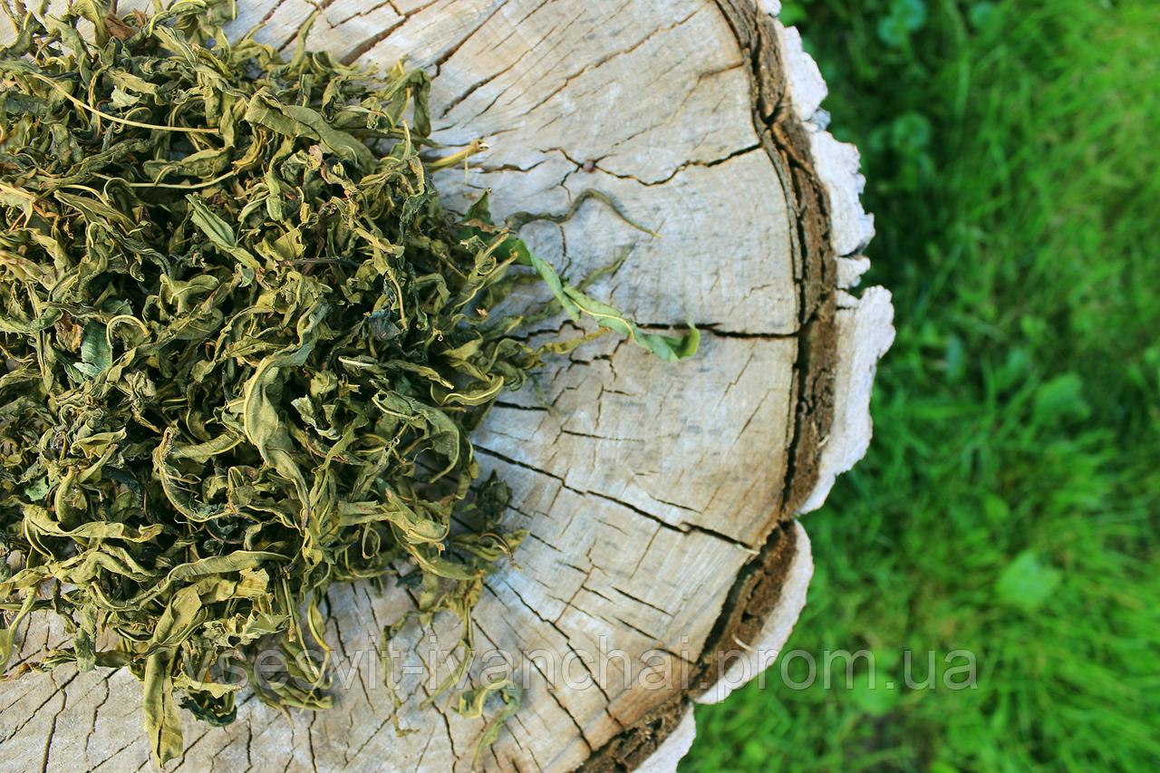 Іван-чай Зелений крупний лист Иван-чай крупнолистовой
